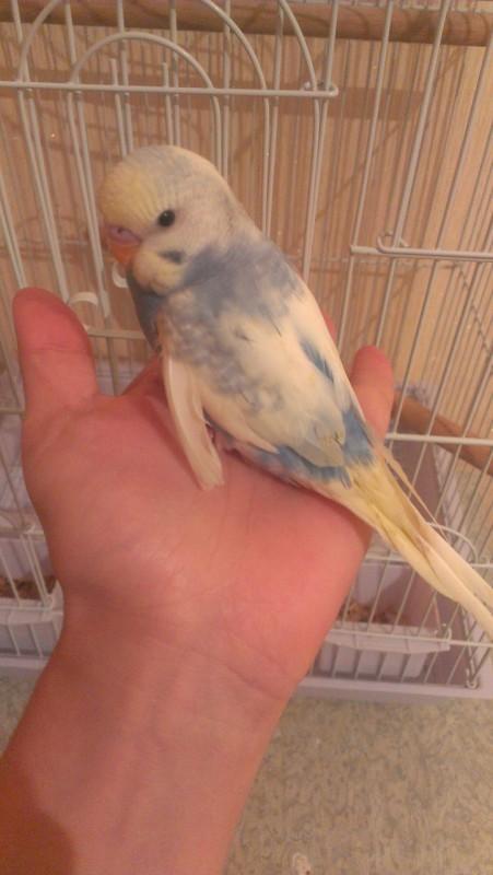 моя птичка счастья! - IMAG5234.jpg