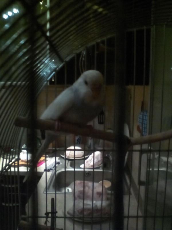 почему мой попугай умер? - IMG_20150222_213948.jpg