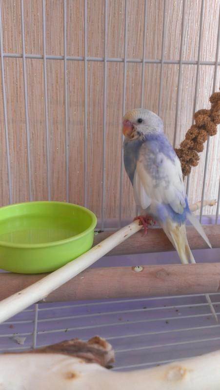 моя птичка счастья! - IMAG5264.jpg