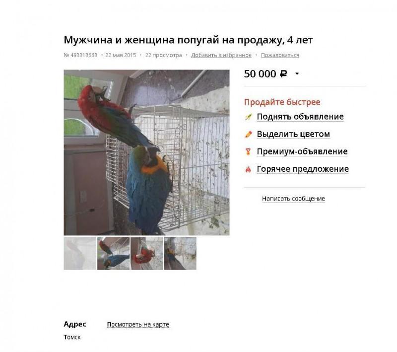 Смешинки на попугая птичью тему - объявление.jpg