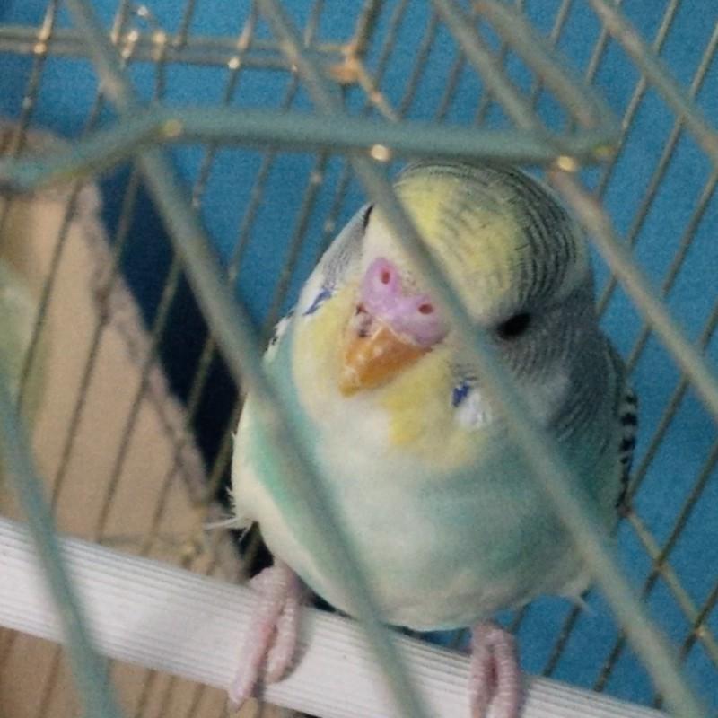 у попугая травма клюва - IMG_20150606_223856.jpg