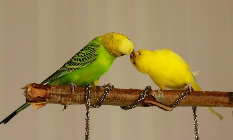 Интресные фотографии попугаев - ifkufj 127.jpg