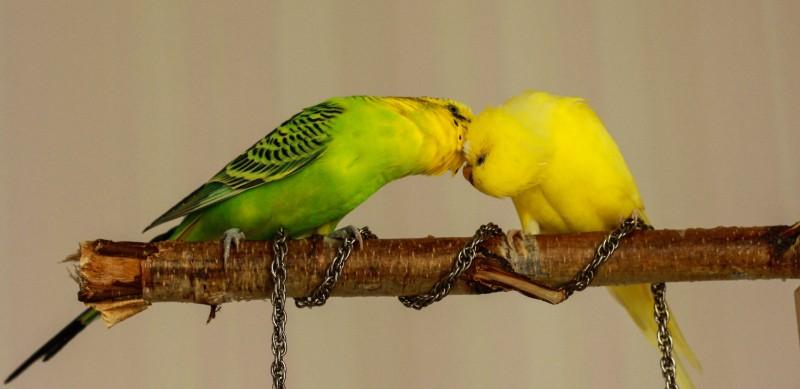 какой сладкий поцелуйчик в шейку)) - ifkufj 137.jpg