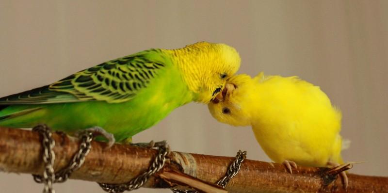 Интресные фотографии попугаев - ifkufj 158.jpg