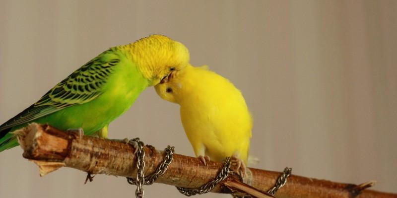 Интресные фотографии попугаев - ifkufj 161.jpg