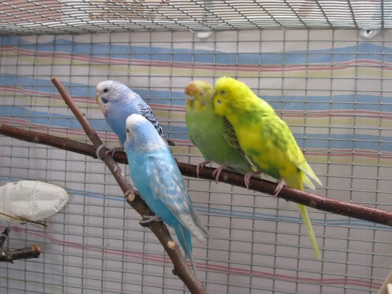 Наши птицы - IMG_2861.JPG