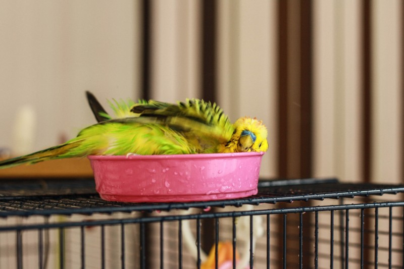 Интресные фотографии попугаев - jmgc 272.jpg