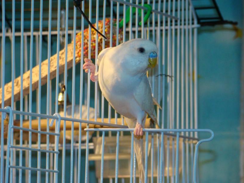 Интресные фотографии попугаев - DSC03448.JPG