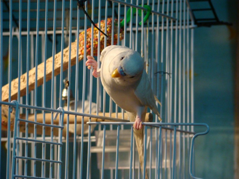 Интресные фотографии попугаев - DSC03447.JPG