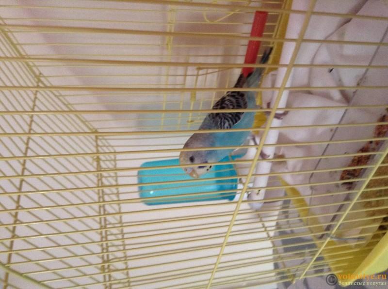 Захворів папуга - image.jpg
