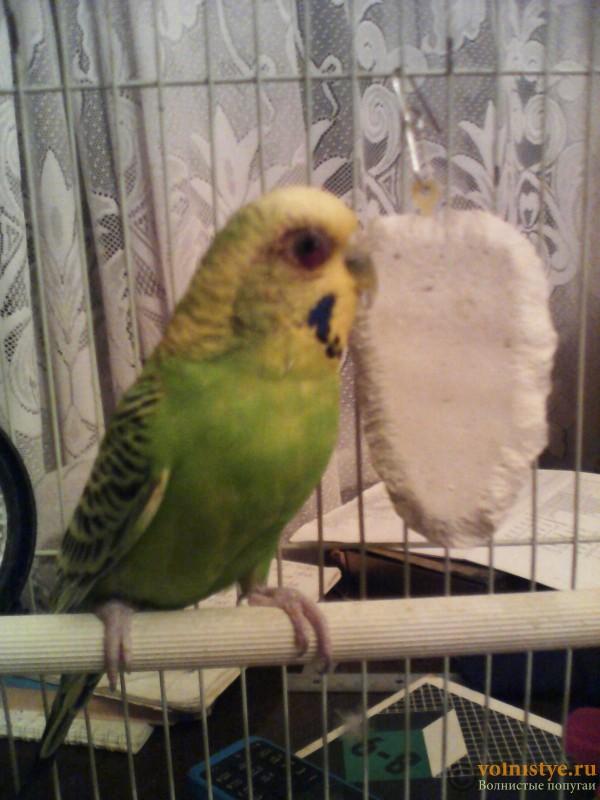 Попугай - 1442506428590.jpg