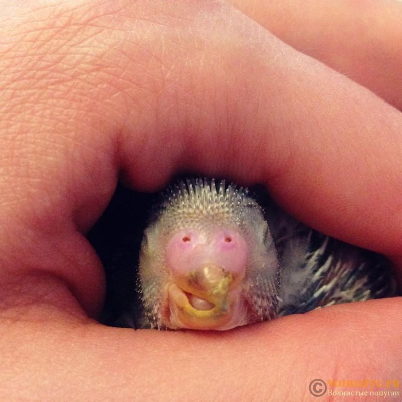 Гнездование Лукаса и Розалиты 2015 - 2. - IMG_9648.JPG