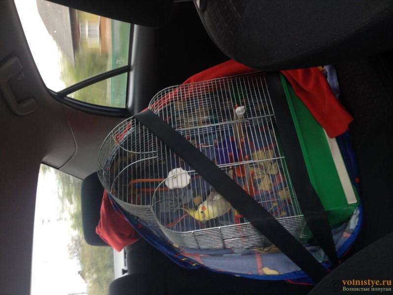 [Анонс] Транспортировка волнистых попугаев - image.jpg