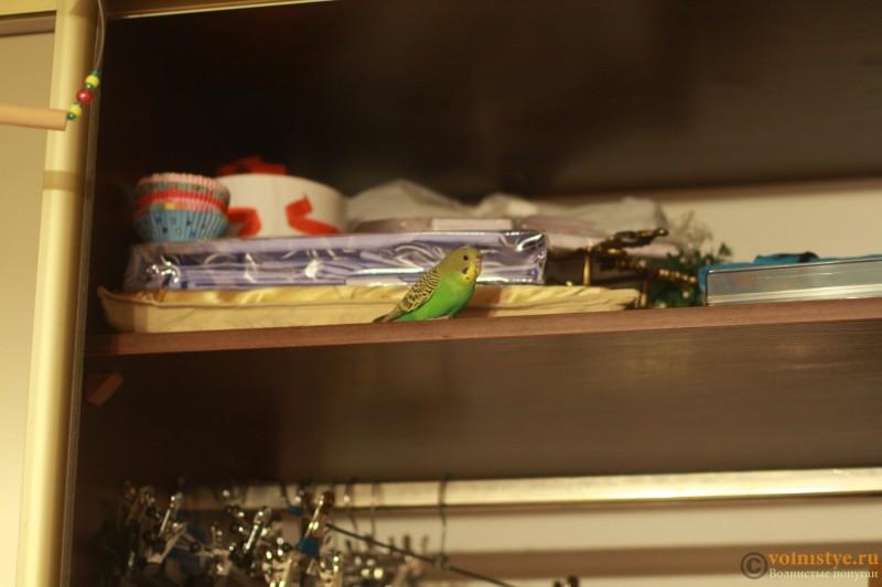 Сидит обычно на шкафу на полке, иногда прилетает в клетку. Спит в клетке - IMG_8619.JPG