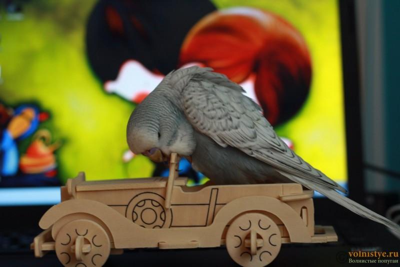 Интресные фотографии попугаев - lllhjtu 108.JPG