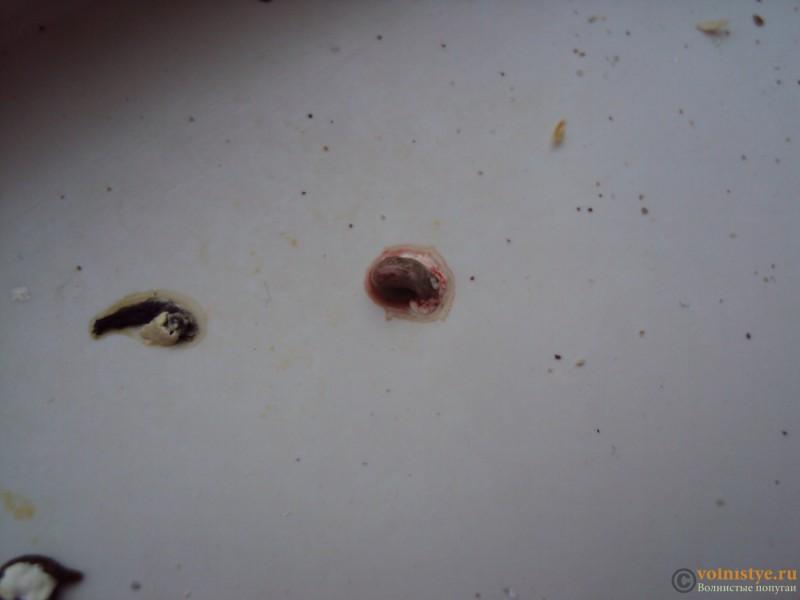 Выделения с кровью - DSC03333.JPG