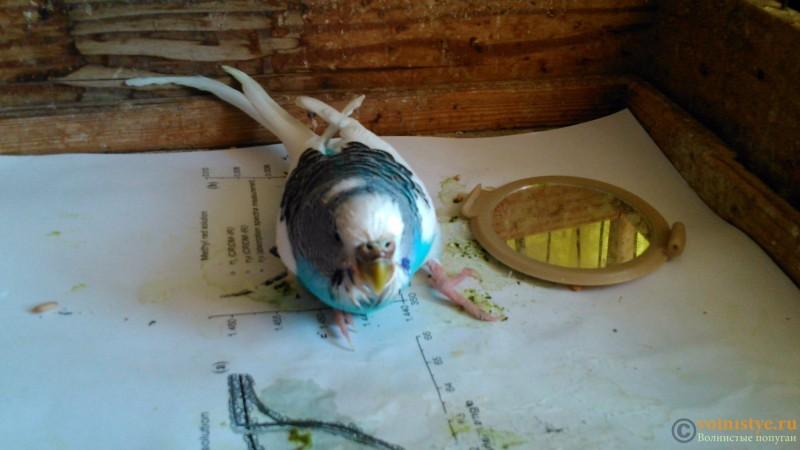 Птица по-прежнему подволакивает левую лапку - DSC_0576.jpg