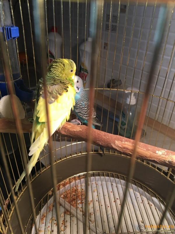 Скажите что с попугаем??? - image.jpeg