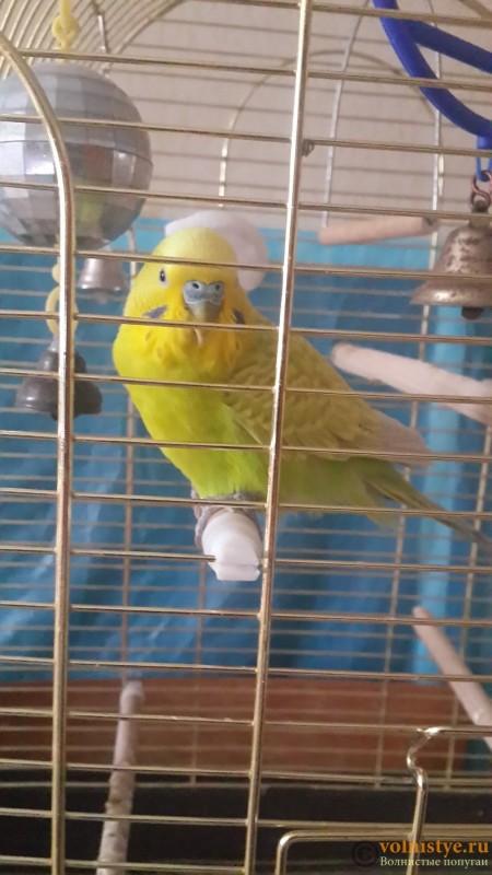 Волнистый попугай ослеп? - 20160312_180429-1.jpg