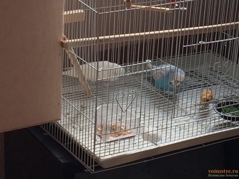 Вид попугая - image.jpeg