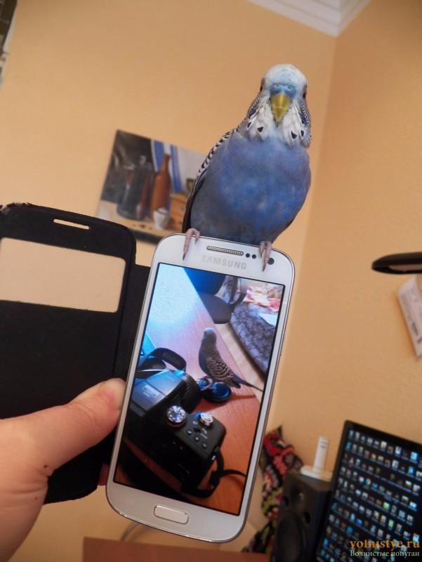 Первое слово попугая - 100_0910.JPG