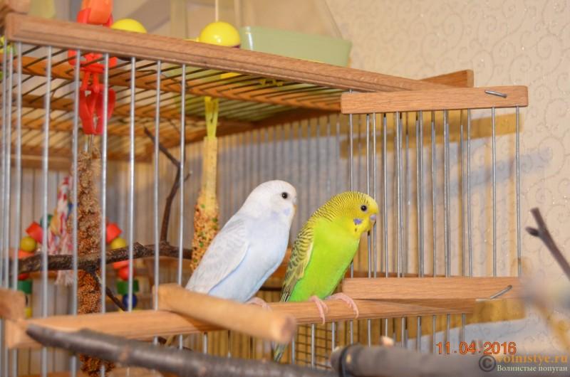 Новая семья!!! - DSC_0414.JPG