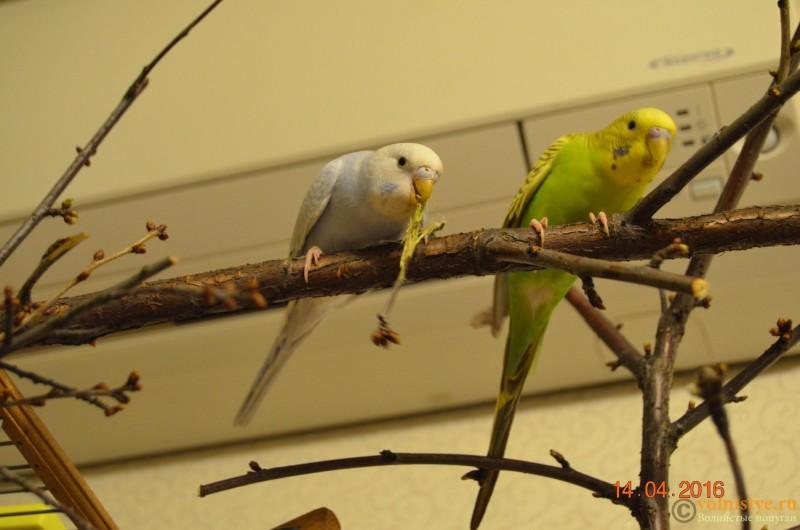 Новая семья!!! - DSC_0425.JPG