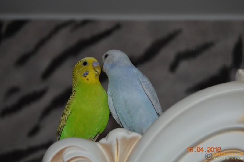 Новая семья!!! - DSC_0442.JPG