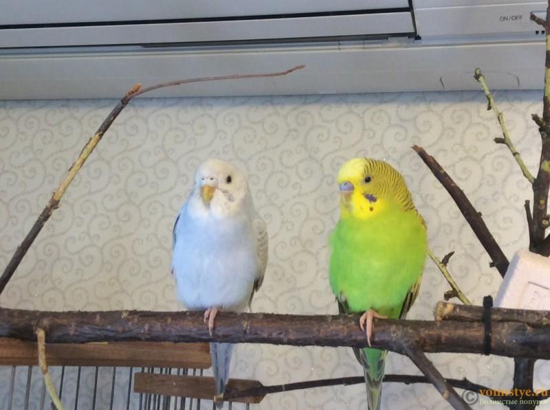 Новая семья!!! - image.jpeg