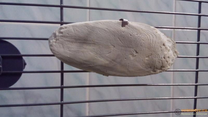 Минеральные камни и сепия для волнистого попугая - IMG_20160701_211954.jpg