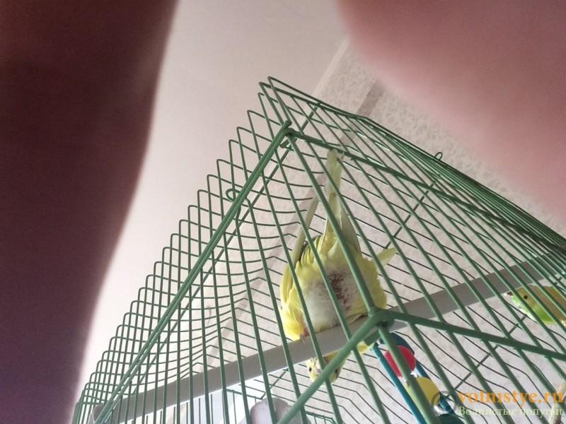 Попугай очень мало ест, жидкий стул, зеленый кал,Вялый - image.jpeg
