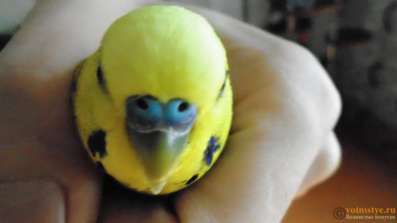 Попугай чихает - DSC01766.JPG