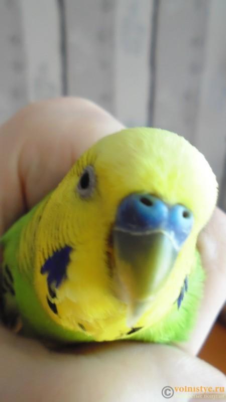 Попугай чихает - DSC01769.JPG