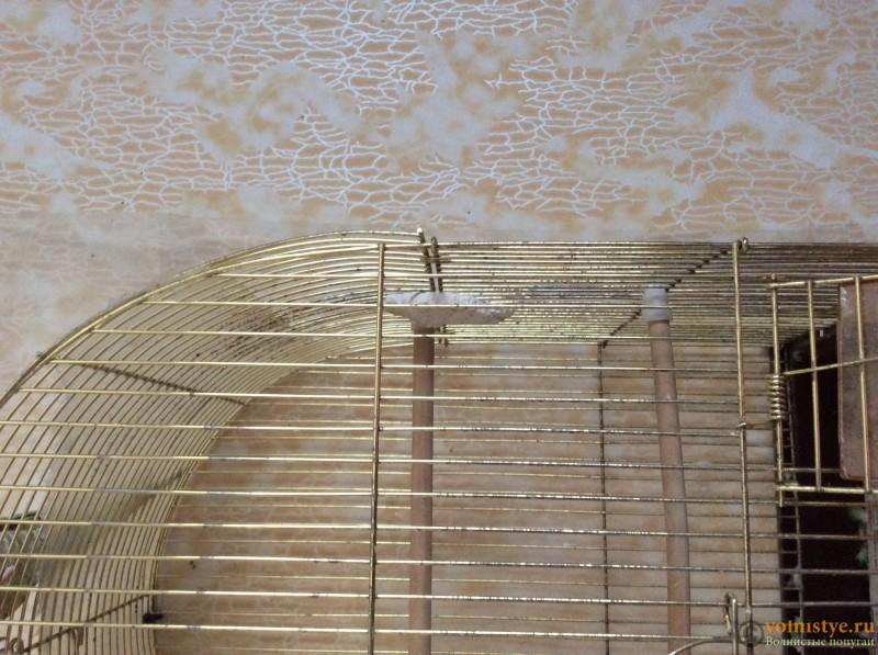 У птички желтый гной на лапке. - image.jpeg