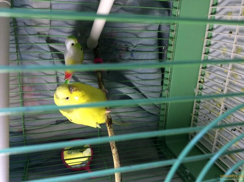 Моя птичка болеет - image.jpg