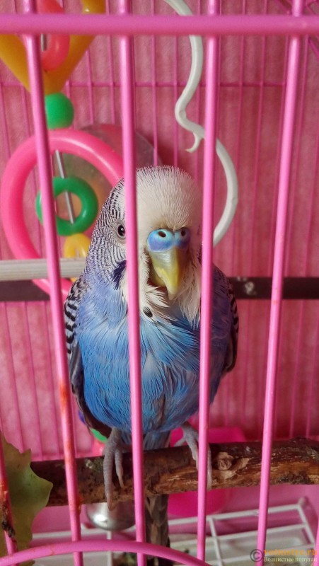 попугай упал в суп - 20160926_140856.jpg