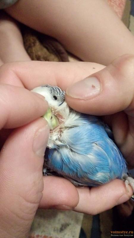 попугай упал в суп - 20160927_214050.jpg