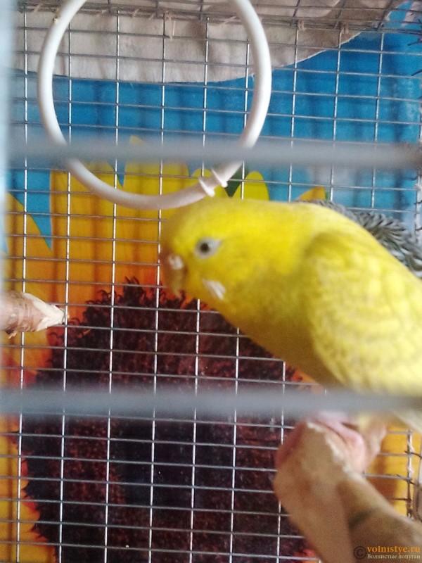 Гиперкератоз у попугая - IMG_20161001_111812.jpg