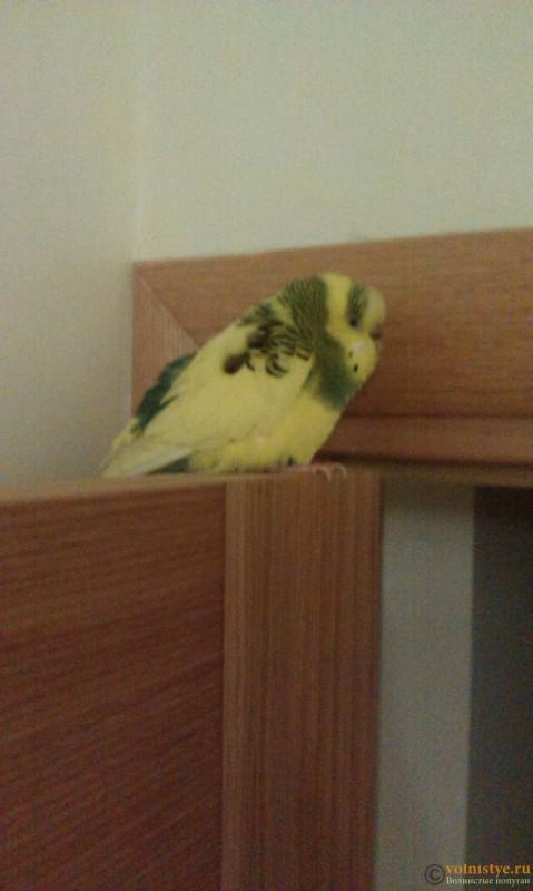 Попугай очень мало ест, жидкий стул, зеленый кал,Вялый - IMAG4482.jpg
