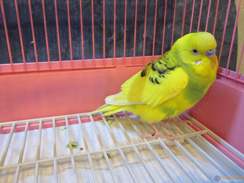 Заболел попугай - IMG_8707.JPG