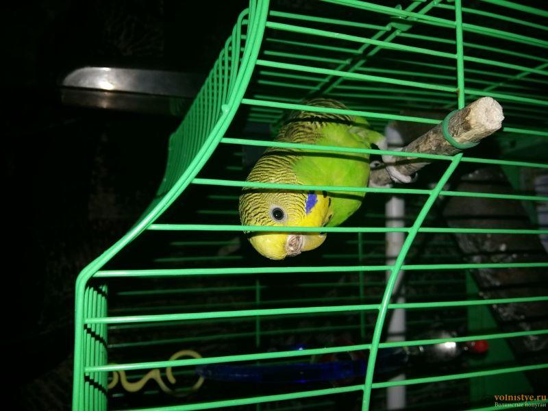Заболел попугай. Нужна помощь - 20161115_232423.jpg