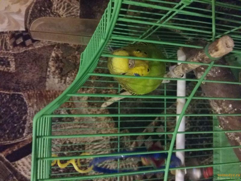 Заболел попугай. Нужна помощь - 20161115_232553.jpg