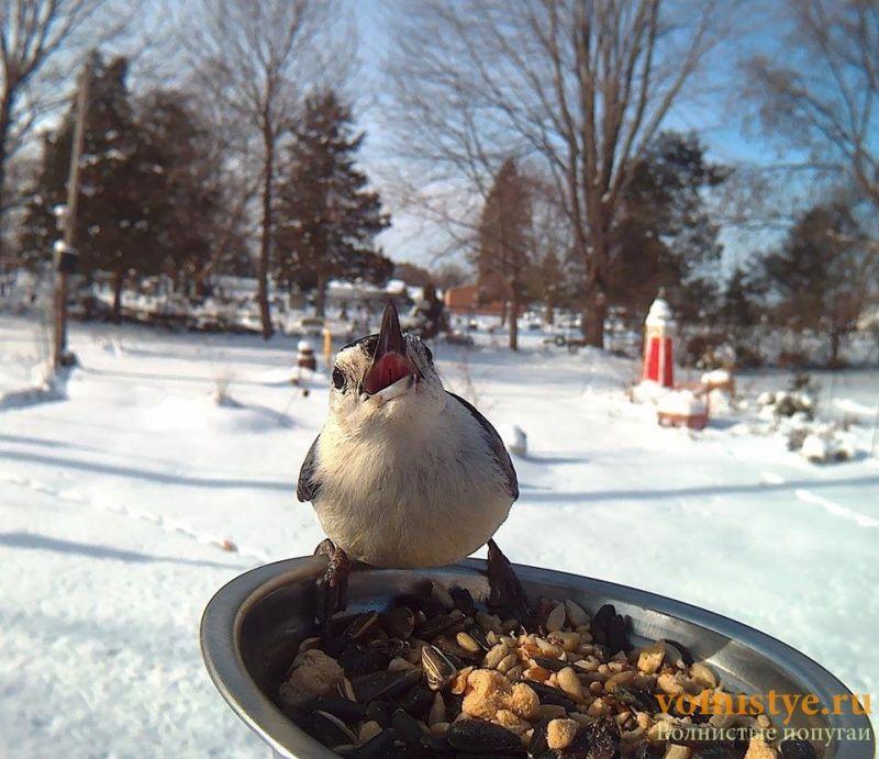 Интресные фотографии попугаев - 148247434113149243.jpg