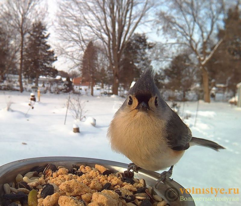 Интресные фотографии попугаев - 148247434416371305.jpg