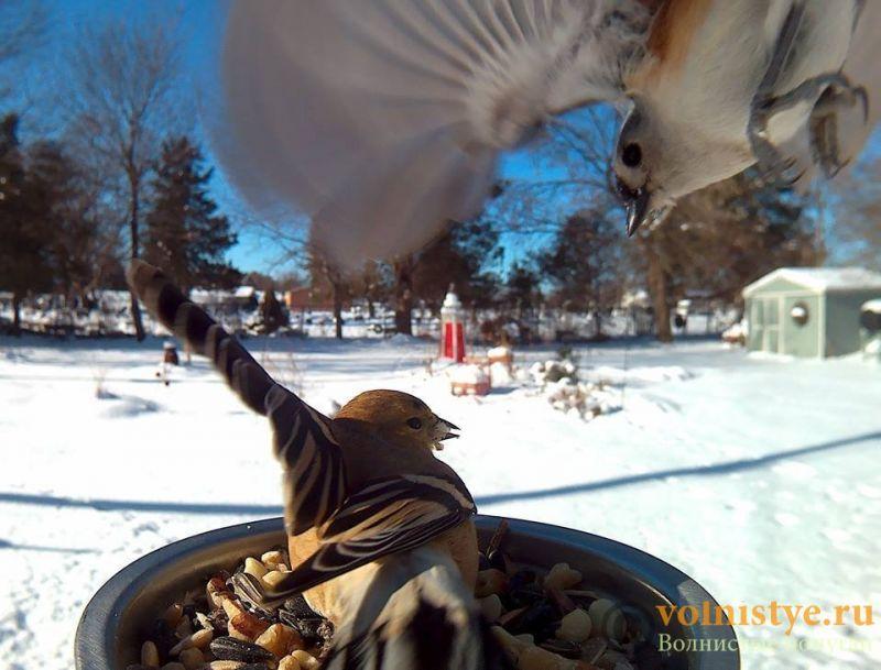 Интресные фотографии попугаев - 1482474323166395717.jpg