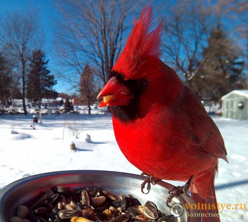 Интресные фотографии попугаев - 1482474331183840368.jpg