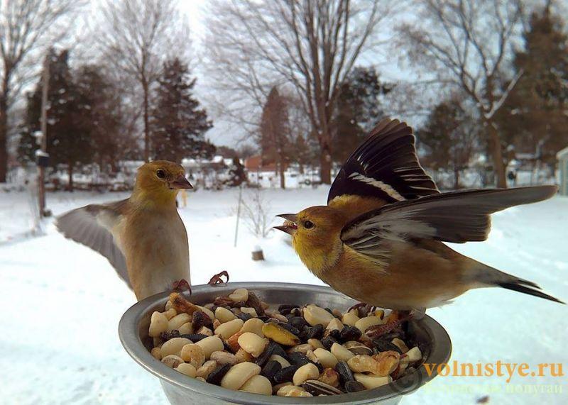 Интресные фотографии попугаев - 1482474334151035521.jpg