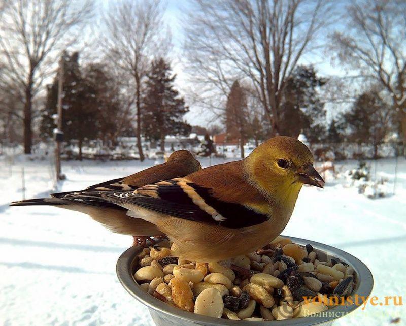 Интресные фотографии попугаев - 1482474335145757413.jpg