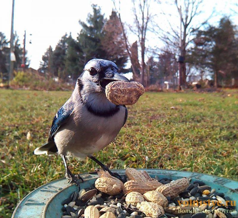 Интресные фотографии попугаев - 1482474337181728919.jpg