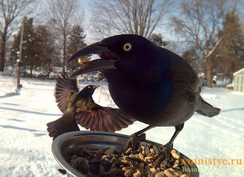 Интресные фотографии попугаев - 1482474339159327288.jpg